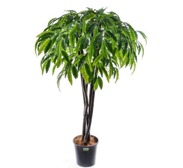 Искусственное дерево манго