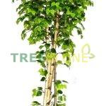 Искусственное дерево Береза